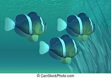 COASTAL  GEMS - Life on the reef for a school of fish.