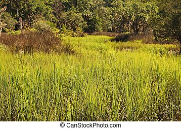 Coastal Georgia marsh grasses