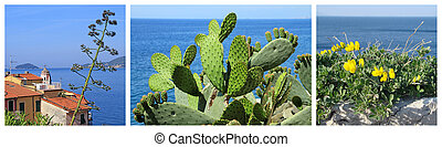 coastal landscape collage - images of Mediterranean, Tellaro...