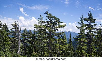 Coastal Mountains near Vancouver
