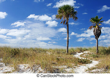 Coastal Path - Coastal path on sand dune with twio palm...