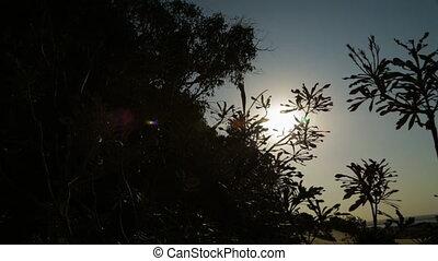 Coastal Plants Sunset Silhouettes, Qld Island