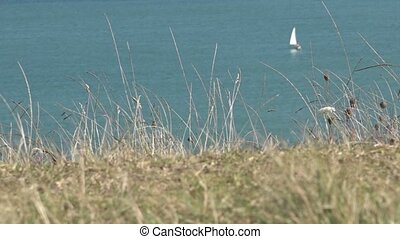 Coastal plants with yacht sail in the sea background