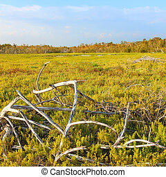 Coastal Prairie Landscape Everglades - Coastal prairie of ...