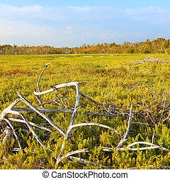 Coastal Prairie Landscape Everglades - Coastal prairie of...