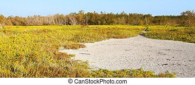 Coastal Prairie Landscape Everglades