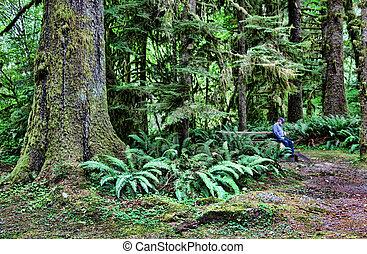 Coastal Rainforest Giant Trees