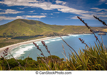 Wickliffe bay Pacific coast of New Zealand, Otago Peninsula with flax in foreground