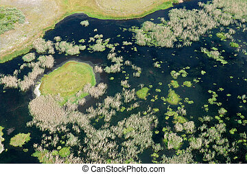 Coastal wetland