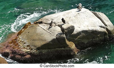 Coastal with cormorant (Spain,Costa Brava)