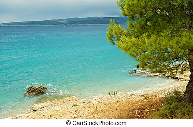 Adriatic Sea - Coastline of the Adriatic Sea with pine tree