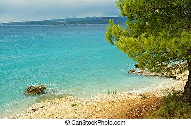 Adriatic Sea - Coastline of the Adriatic Sea with pine tree