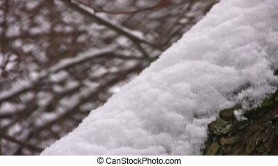 coated, дерево, стебель, снег, панорамирование, белый