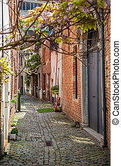 cobbled streets of Brussels - View old street with trees in...