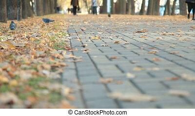 Cobblestone alley in autumn