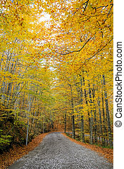 Cobblestone Road in Yedigoller National Park, Turkey