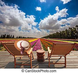 coberta madeira, cadeiras, ligado, a, trigal