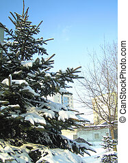 coberto, árvore, neve