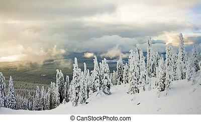 coberto, árvores inverno, neve