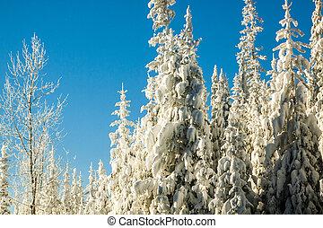 coberto, floresta, árvores, neve