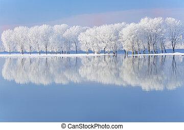 coberto, geada, árvores inverno