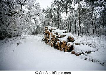 coberto, lado, log, estrada, neve