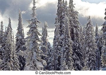 coberto, neve, árvores