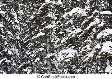 coberto, neve, árvores.