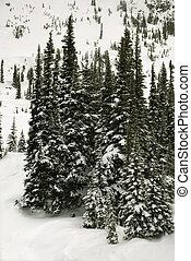 coberto, neve, pinho, árvores.