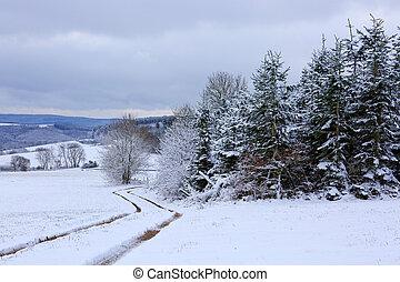 coberto, road., árvores inverno, neve