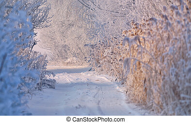 coberto, rural, inverno, estrada, neve
