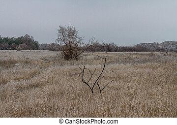 coberto, tavrian, steppe, ice.