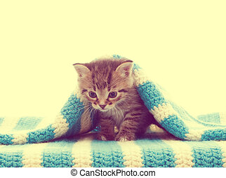 cobertor azul, tabby, gatinho