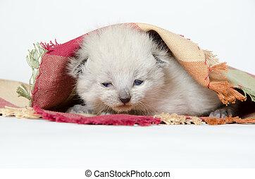 cobertor bebê, gatinho