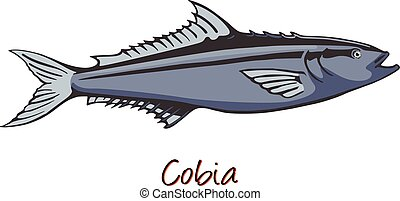 Cobia, Color Illustration
