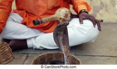 Cobra enchanter sitting in the street charming his snake