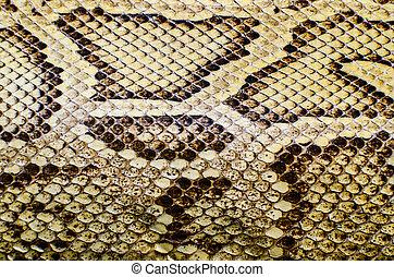 cobra, textura, pele