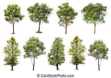 cobrança, de, árvores verdes, isolado, branco, fundo