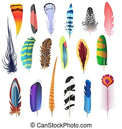 cobrança, de, detalhado, cor, pássaro, penas, set., decoração, elements., vetorial, illustration.