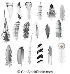 cobrança, de, detalhado, preto branco, estilo, pássaro, penas, set., decoração, elements., vetorial, illustration.