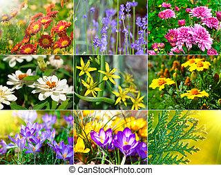 cobrança, de, diferente, flores