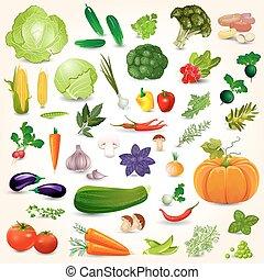 cobrança, de, isolado, maduro, legumes, ervas temperos, cogumelo