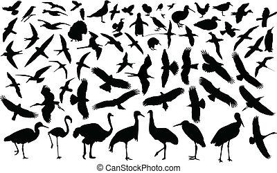 cobrança, de, pássaros