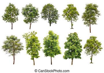 cobrança, desligado, árvores verdes, isolado, branco, fundo