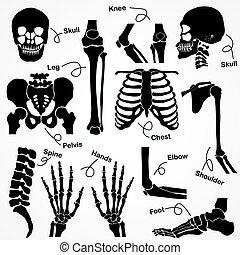 cobrança, esqueleto humano