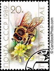 cobrar, abeja trabajador, polen, flor