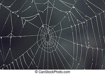 Cobweb - drops of morning dew on a spider web in fog