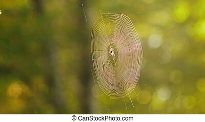 Cobweb high on a tree in a dense forest. The trees in the...