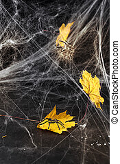 Cobweb or spider's web against a black background,