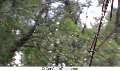 cobweb small fly tree - big cobweb with many of small flies...